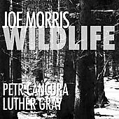 Joe Morris (Guitar): Wildlife [Digipak]