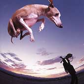 Paul Gilbert: Flying Dog
